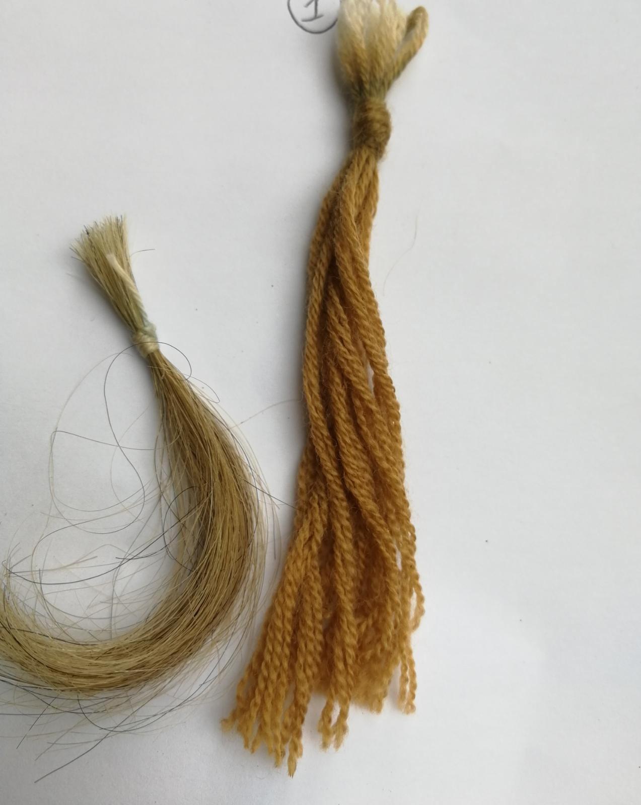 crspinobis